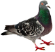 pest control services wakefield va