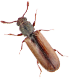 powder beetle exterminators carrollton va