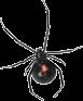 spider exterminators ivor va