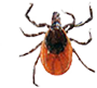 tick infestation control courtland va