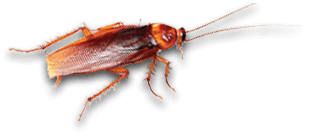 roach exterminators in newsoms va