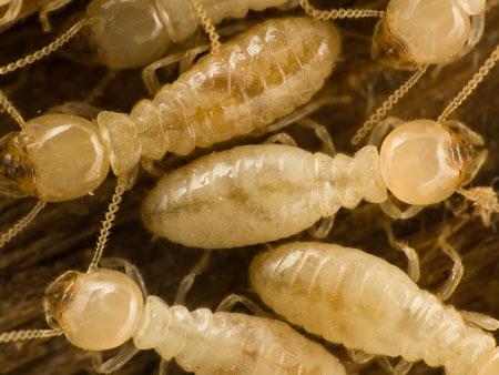 virginia termite exterminators