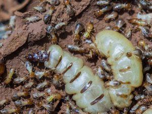 termite control companies franklin va