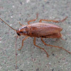 roach extermination companies suffolk va