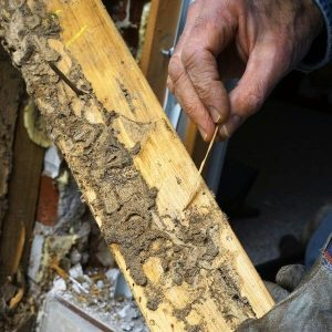 Structural Termite Damages