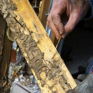 virginia termite moisture inspection companies