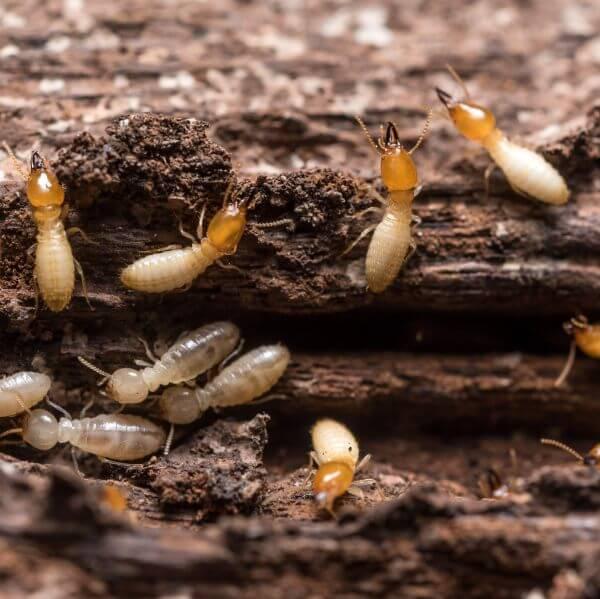 Termite Control Company