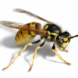 flying insect extermination services