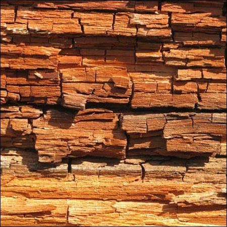 brown wood rot inspectors