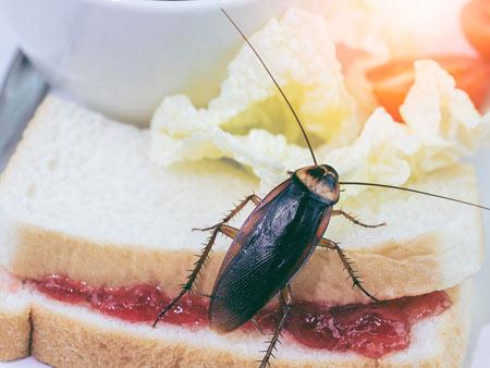 smithfield cockroach exterminators
