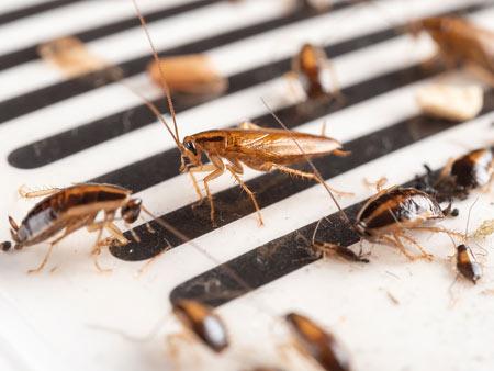 roach control companies chesapeake va