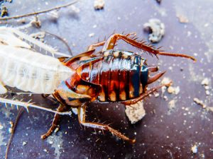 roach control companies portsmouth va