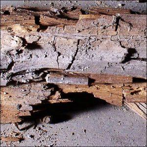 dry-rot-wood-inspectors