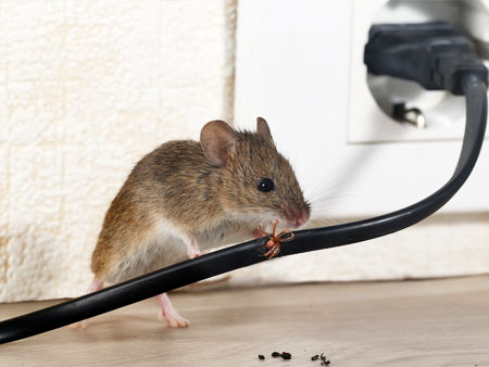 mice exterminating services