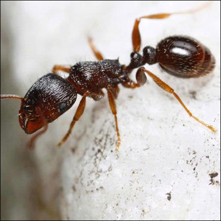 ant exterminators suffolk va