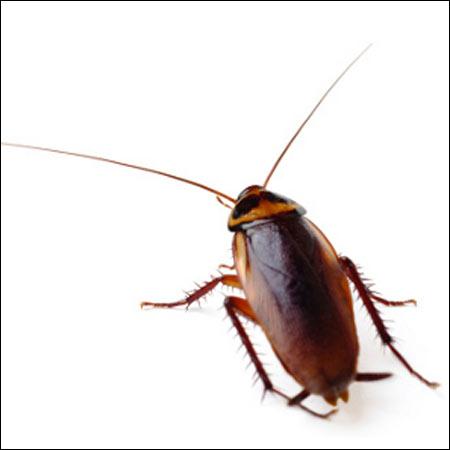 roach extermination services waverly va