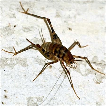 spider cricket exterminators smithfield va