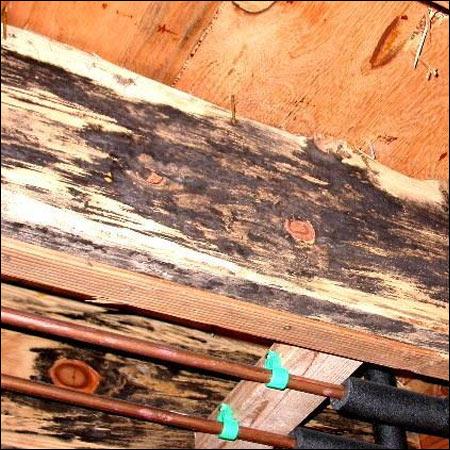 chesapeake virginia termite moisture inspectors