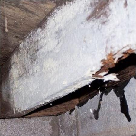 suffolk virginia termite moisture inspectors